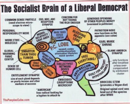 Socialist brain