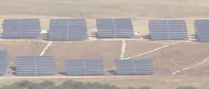 sun farm