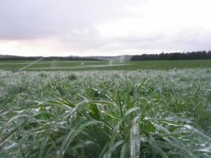 k line frost